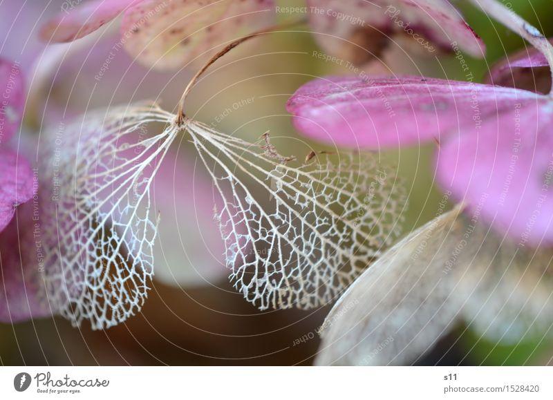 Nature Old Plant Beautiful Flower Leaf Blossom Senior citizen Natural Brown Elegant Bushes Blossoming Transience Violet Dry