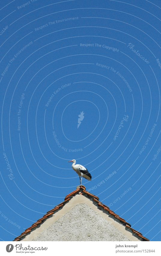 lightning conductors Roof Stork Gable House (Residential Structure) Roof ridge Blue Bird first Sky