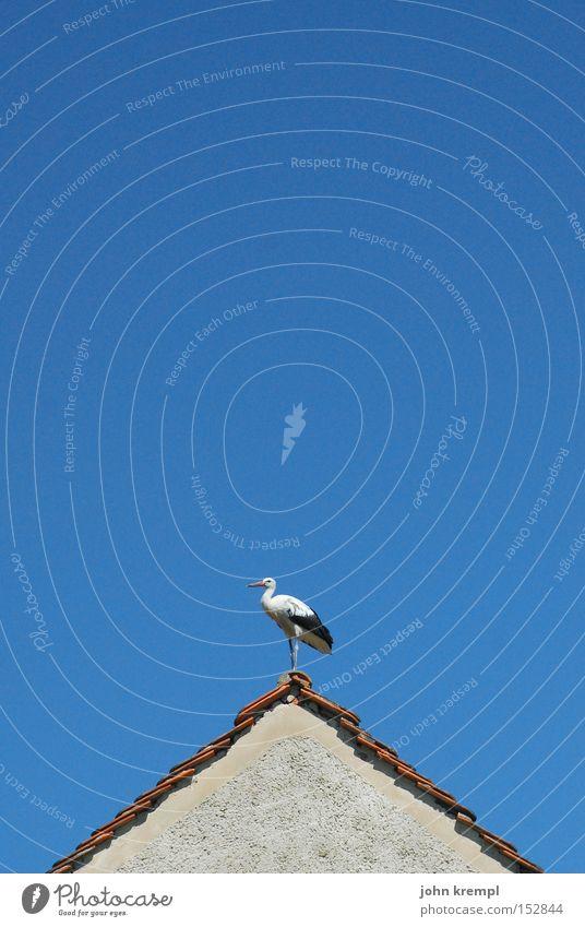 Sky Blue House (Residential Structure) Bird Roof Stork Gable Roof ridge