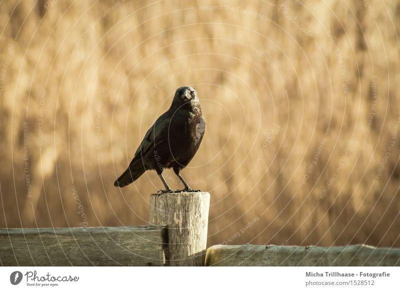 Nature Animal Black Environment Natural Wood Flying Bird Orange Weather Wild animal Sit Wing Observe Beautiful weather Break
