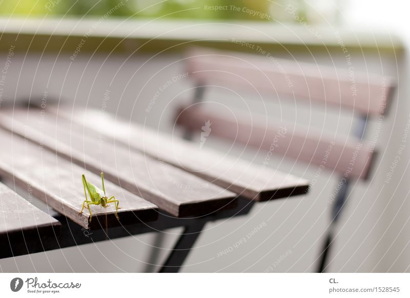 grasshopper Living or residing Furniture Chair Table Balcony Animal Locust Insect 1 Green Colour photo Exterior shot Deserted Copy Space right Copy Space top