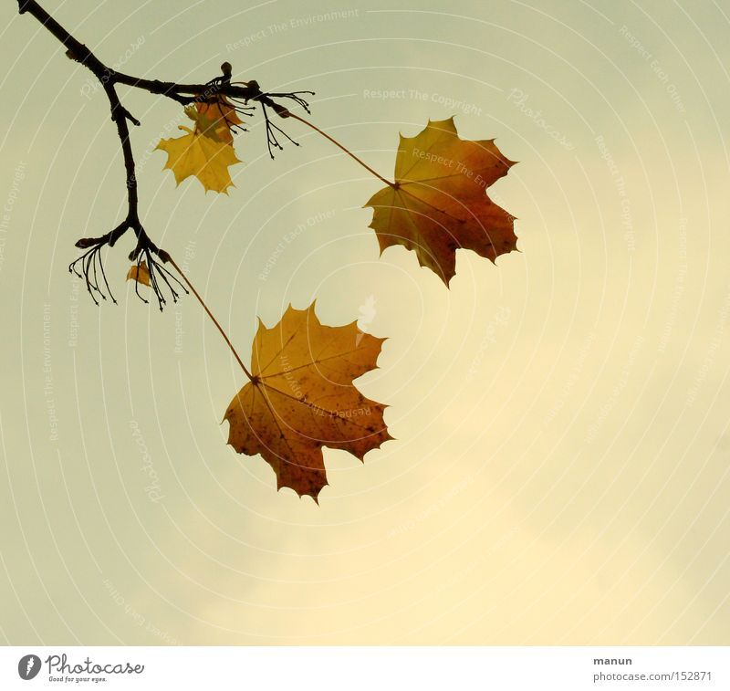 twilight years Autumn Autumnal Leaf Twig Branch Transience Calm Yellow 2 3 Evening Old Colour