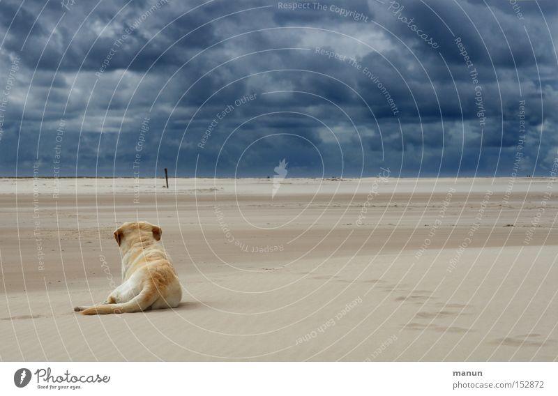 Sky Dog Nature Blue Summer Beach Clouds Calm Far-off places Dark Landscape Autumn Sand Coast Bright Horizon
