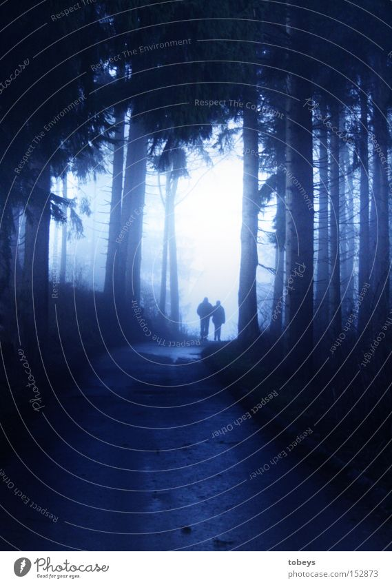 out of the dark Forest Fog To go for a walk Winter Dark Mystic Cold Going Together Couple In pairs