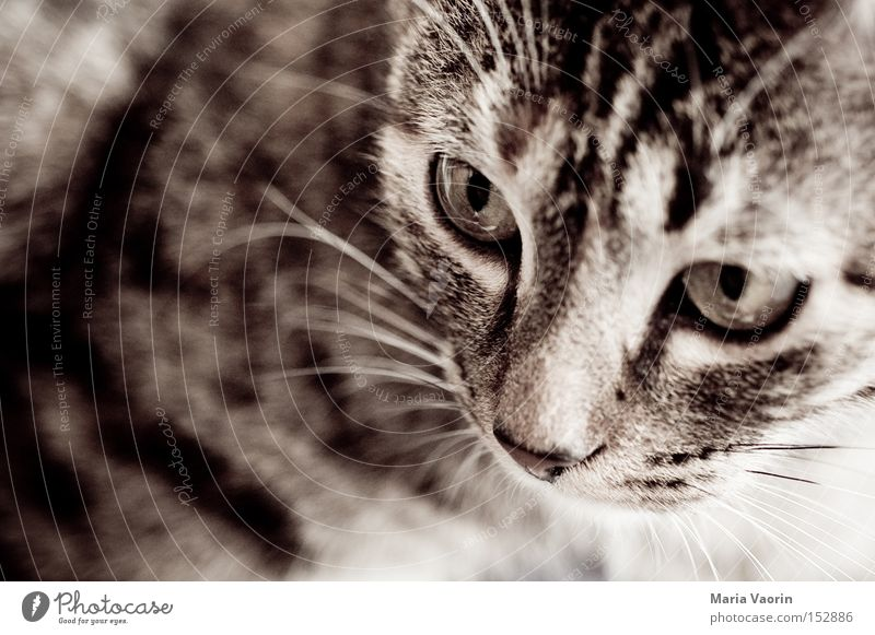 Cat Mouth Nose Dangerous Pelt Concentrate Pet Mammal Snout Domestic cat Animal Whisker Purr