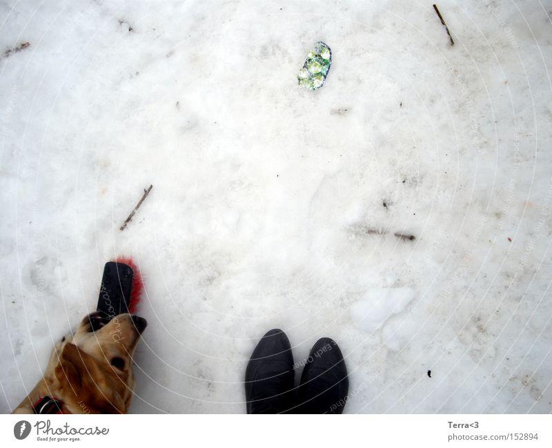 Dog Winter Joy Snow Playing Footwear Dirty Toys Boots Pet Mammal Broom Labrador Puppy