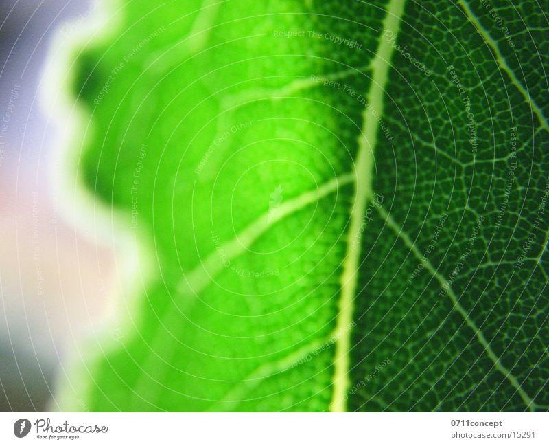 leaf Leaf Plant Green Glittering Sun