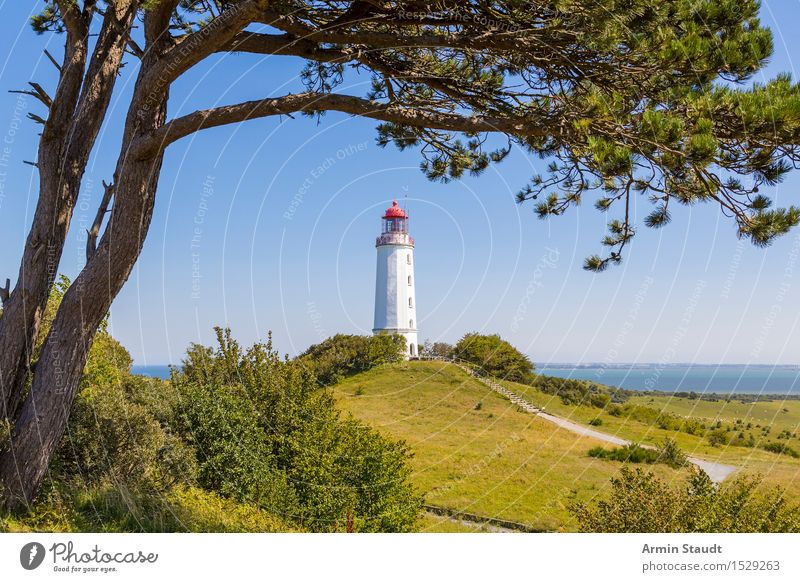 Lighthouse Hiddensee Vacation & Travel Tourism Trip Far-off places Summer Summer vacation Island Nature Cloudless sky Beautiful weather Tree Hill Coast