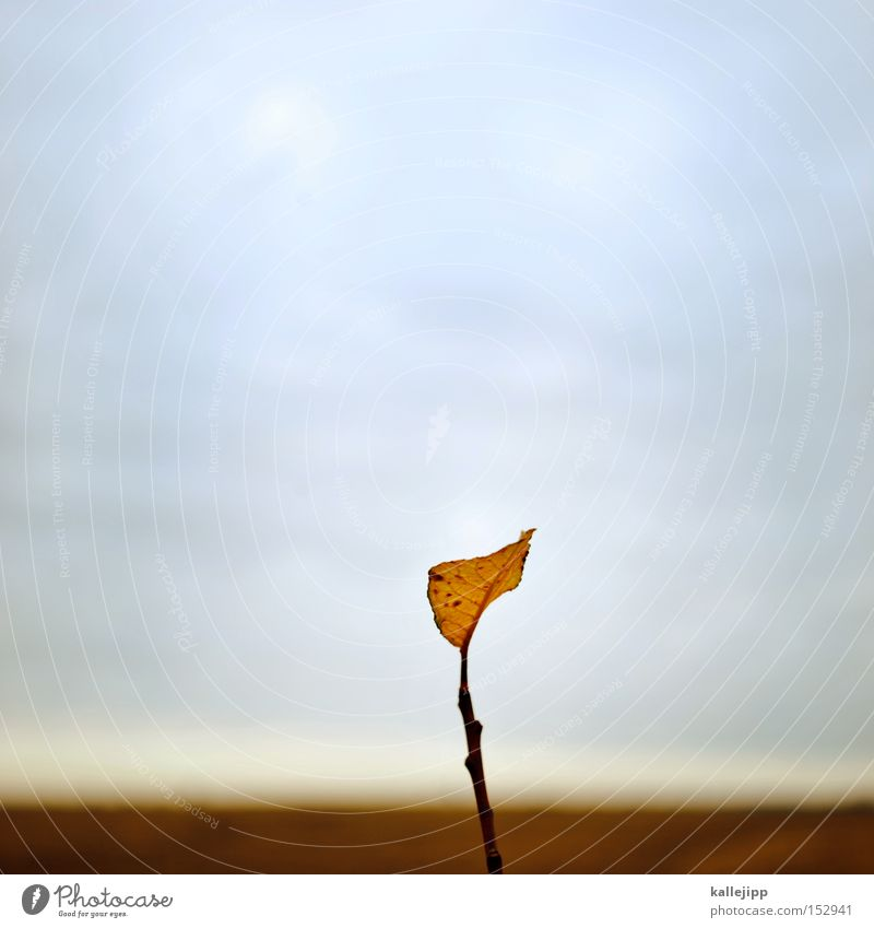 the last calendar page Leaf Seasons Year January Winter Autumn Branch Nature Sky Cold Loneliness