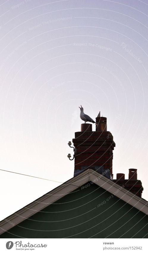 Bird Coast Roof Scream Chimney Seagull Beak Crow