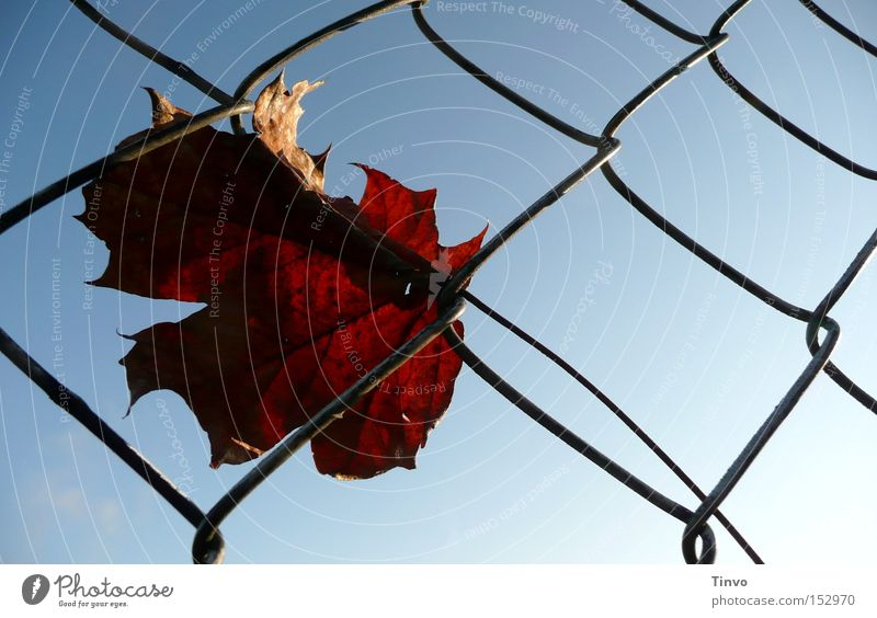 Autumn timeless Fence Wire netting Sky Autumn leaves Get caught on To go for a walk Loneliness Get stuck Back-light Grief Thought dried leaf Sadness