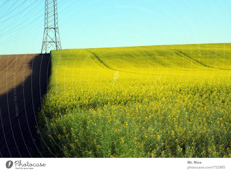 Nature Green Yellow Warmth Power Field Germany Environment Energy industry Electricity Agriculture Border Harvest Canola Production Canola field