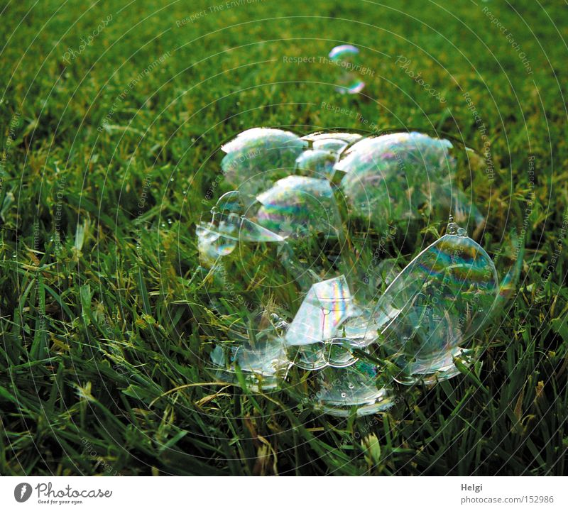 Green Summer Joy Meadow Playing Grass Air Lawn Lie Transience Transparent Soap bubble Bursting Delicate Glimmer