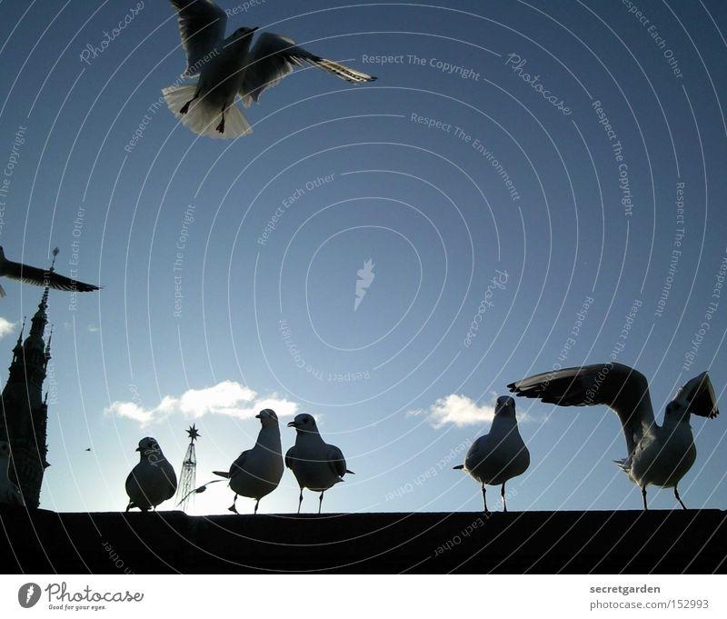 on the blasphemy . . . . ready . . . . LOOOOOOOSSS!!! Seagull Beautiful weather Wall (barrier) Silhouette Sun Judder Cold Winter Under Blue Black Back-light