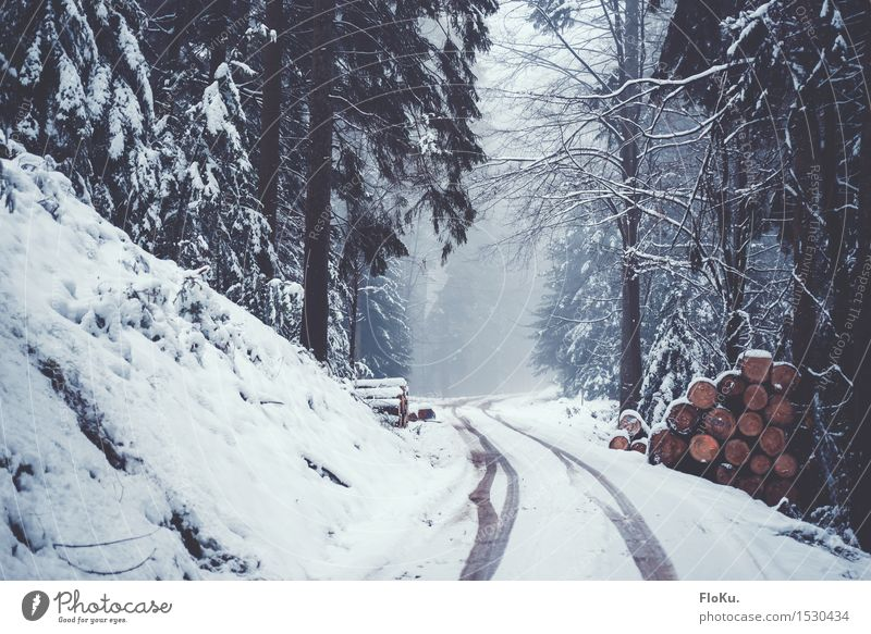 Nature White Tree Winter Forest Cold Environment Street Lanes & trails Natural Snow Wood Gray Moody Germany Weather