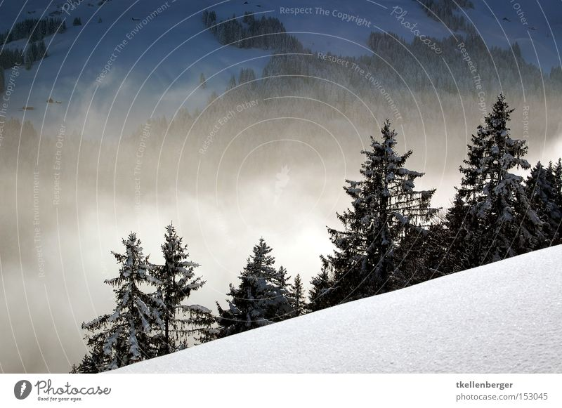 Mountain Dreamworld IV. Fog Forest Snow Clouds Far-off places Fear Beautiful Calm Fir tree Winter Alps Swiss Alps Dream world Threat snowshoeing