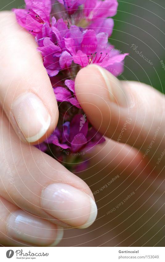 Hand Beautiful Plant Summer Flower Feminine Blossom Style Spring Elegant Skin Fingers Wellness To hold on Delicate Violet