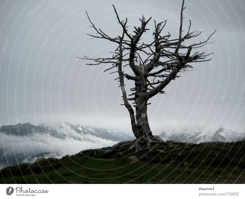 solitariness Mountain Sky Loneliness Decline Tree Bleak Landscape Grief Distress
