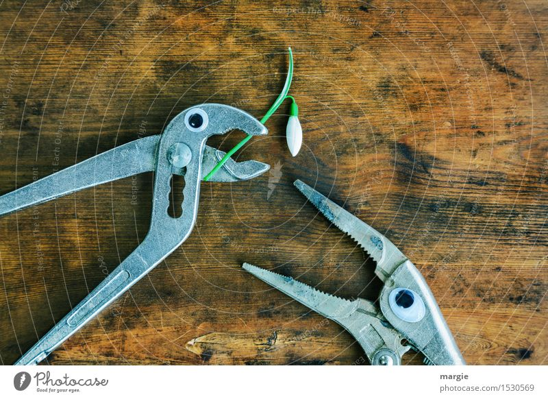 ...... Will you marry me? Two pincers with eyes and a snowdrop on an old wooden table Work and employment Profession Craftsperson Workplace Construction site