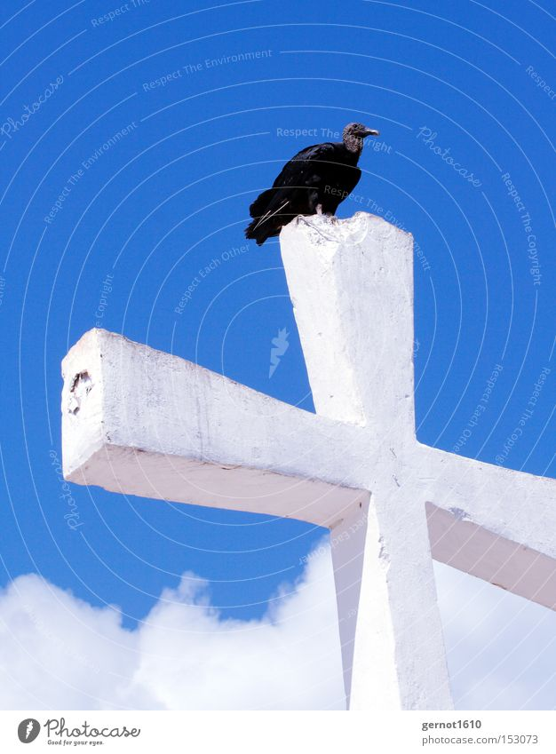 Golgotha 1 Blue White Black Vulture Christian cross Sky Bird Scavenger Symbols and metaphors Flying Feather Concrete Review Overview Landmark Monument