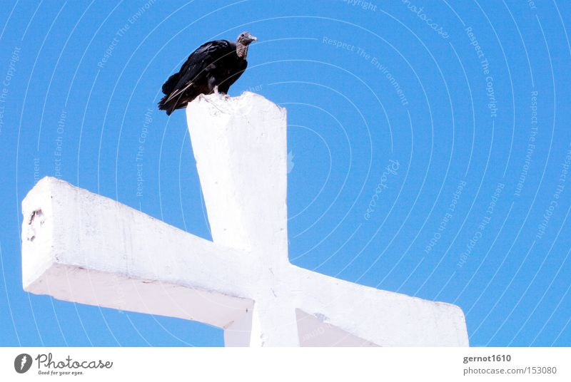 Golgotha 2 Blue White Black Vulture Crucifix Christian cross Sky Bird Scavenger Religion and faith Symbols and metaphors Flying Feather Concrete Review Overview
