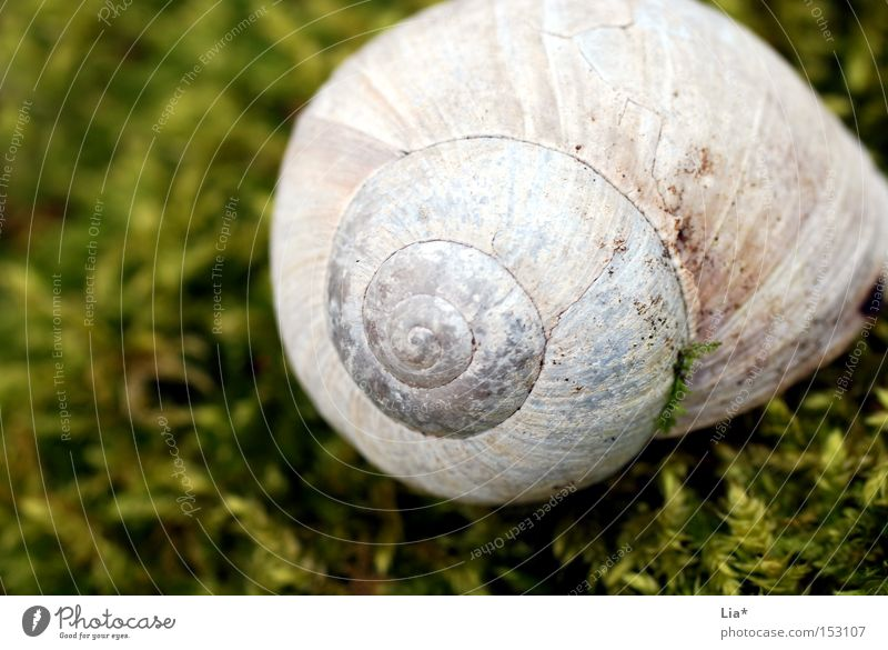 moss Snail shell House (Residential Structure) Vineyard snail Moss Green Enchanted forest Calm Macro (Extreme close-up) Detail Nature Spiral Find Discovery
