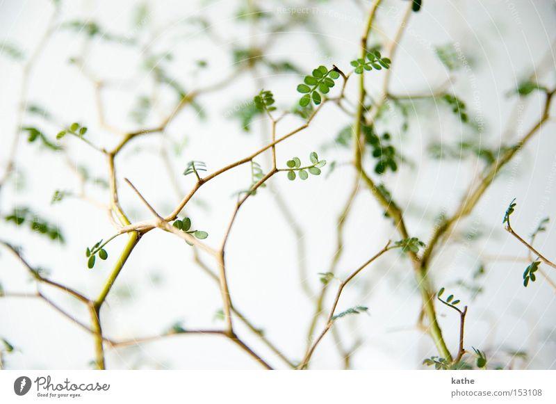 Sky Nature Plant Green Wood Gloomy Bushes Branch Twig Desert Biology Sparse