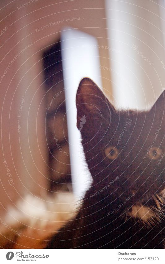 Cat Sun Animal Black Pet Mammal Domestic cat Disaster Hung-over Popular belief