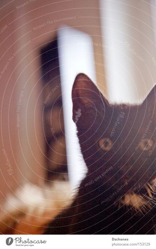 TOKIO. Cat Domestic cat Hung-over Pet Animal Sun Black Disaster Popular belief Mammal kitty