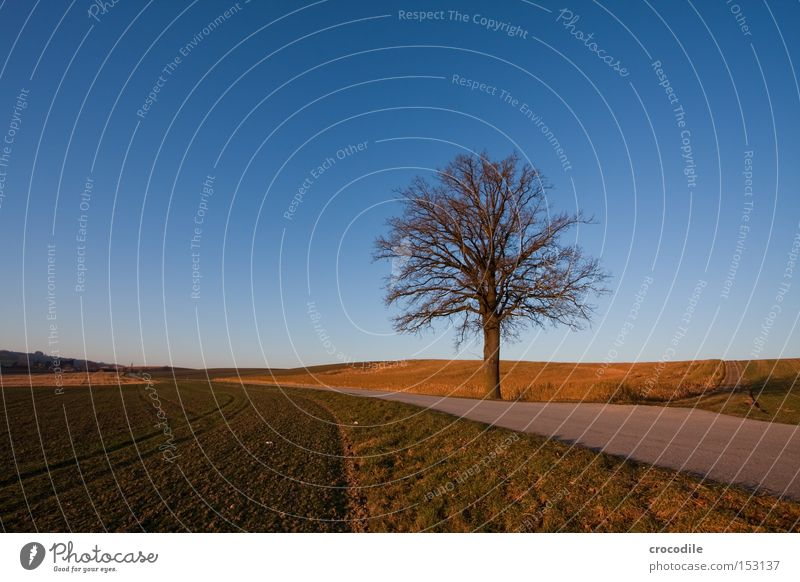 Sky Tree Winter Clouds Street Meadow Field Transport Branch Agriculture Footpath Tree trunk Build on