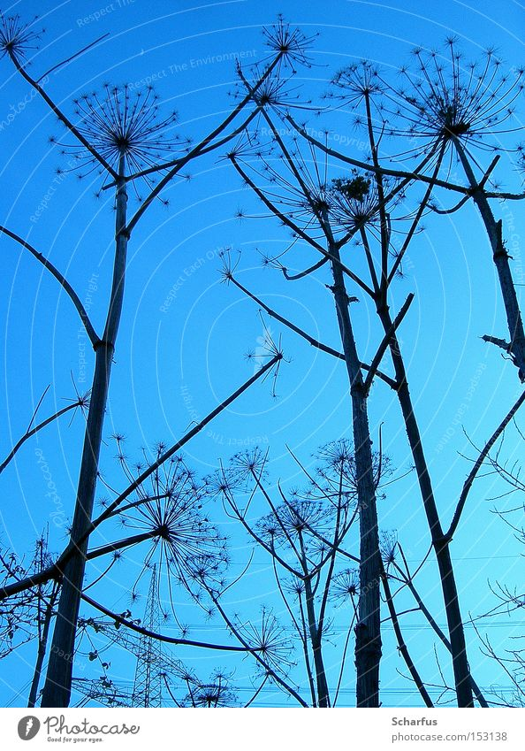toward heaven... Colour photo Exterior shot Detail Abstract Twilight Shadow Silhouette Deep depth of field Worm's-eye view Calm Winter Nature Plant Sky