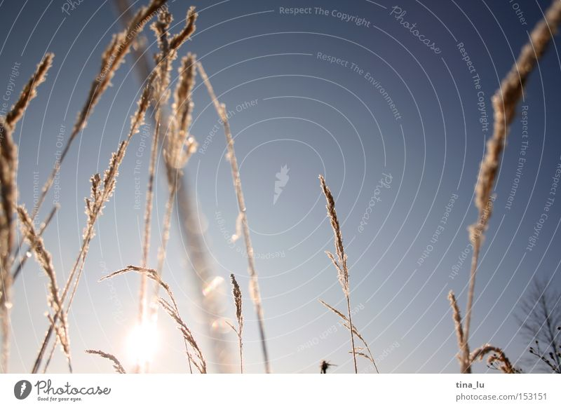 Sky Nature Sun Winter Cold Grass Lighting Ice Wind Frost Blade of grass