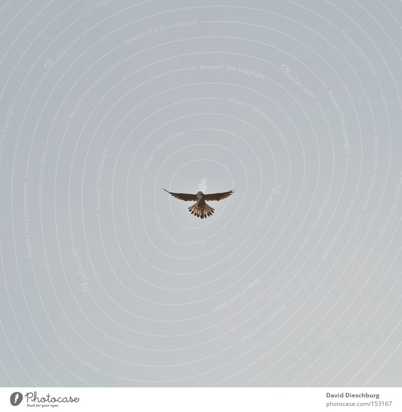 Sky Bird Flying Aviation Feather Wing Hunting Beak Symmetry Attack Celestial bodies and the universe Glide Carnivore Falcon Bird of prey Eagles eyes