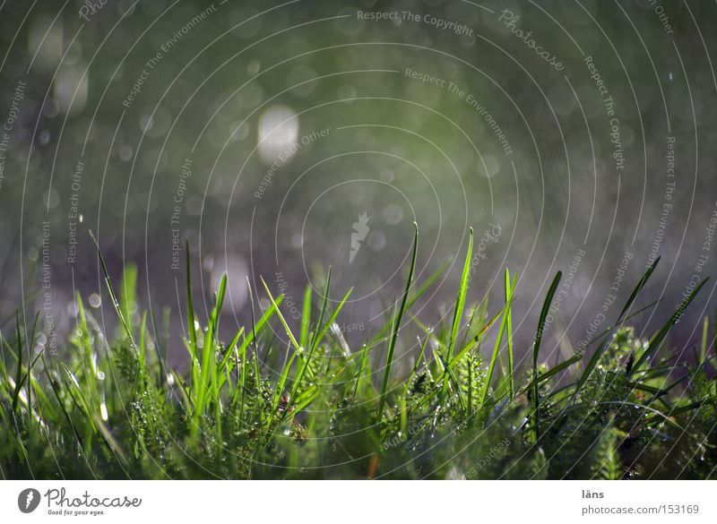 rain Colour photo Exterior shot Copy Space top Day Shadow Contrast Silhouette Nature Plant Drops of water Weather Rain Grass Meadow Glittering Wet Green