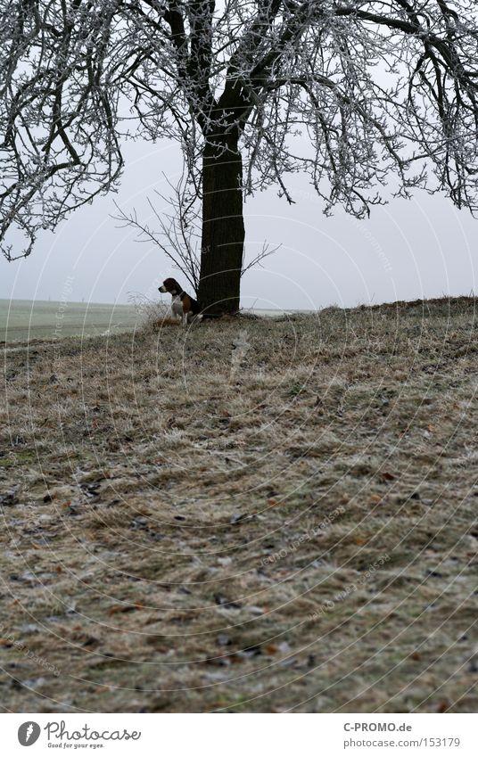 Dog Tree Animal Winter Cold Wait Mammal Boredom Exposed Leashed
