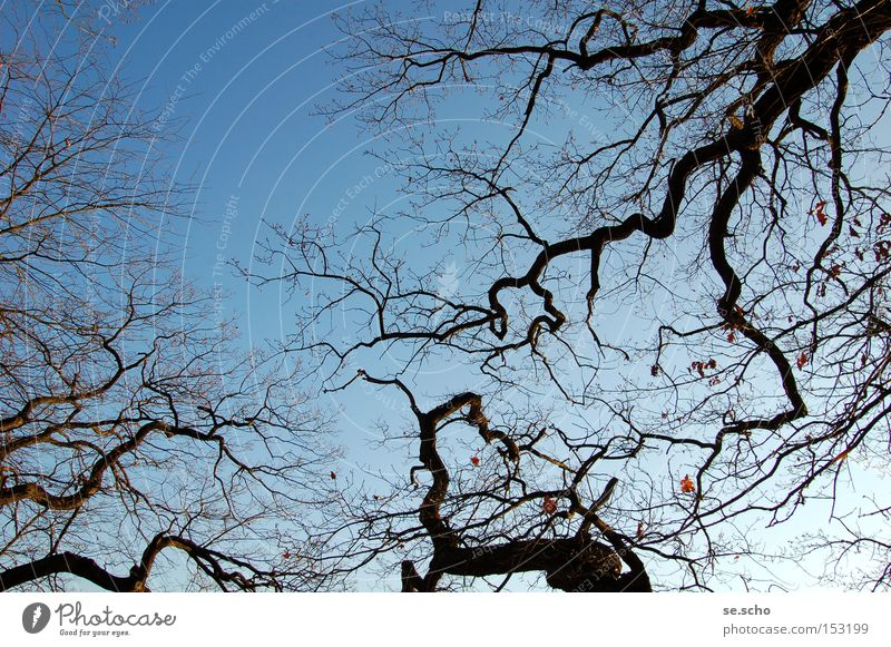 winter trees Tree Branch Twig Branched Sky Blue Winter Cold Silhouette fractal
