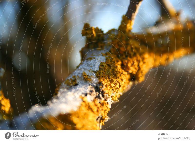.:: WINTER magic ::. Winter Green Tree Branch Contrast Blur Snow