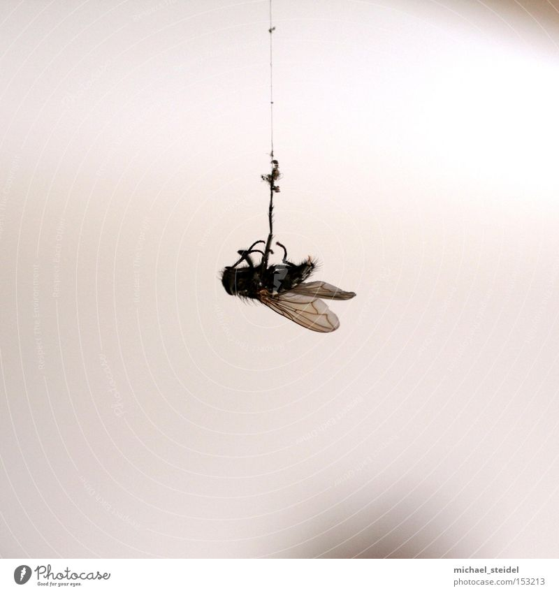 Hang it! Fly Accident Disaster Animal Nature Cobwebby Needy Disgust
