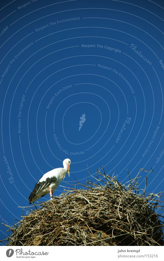 nest Stork Nest Sky Blue Bird Nest-building Pregnant