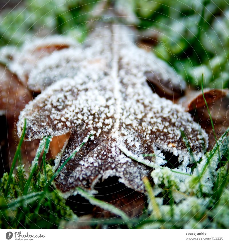 foliage Leaf Frost Winter Cold Old Decline Hoar frost Snow Lawn