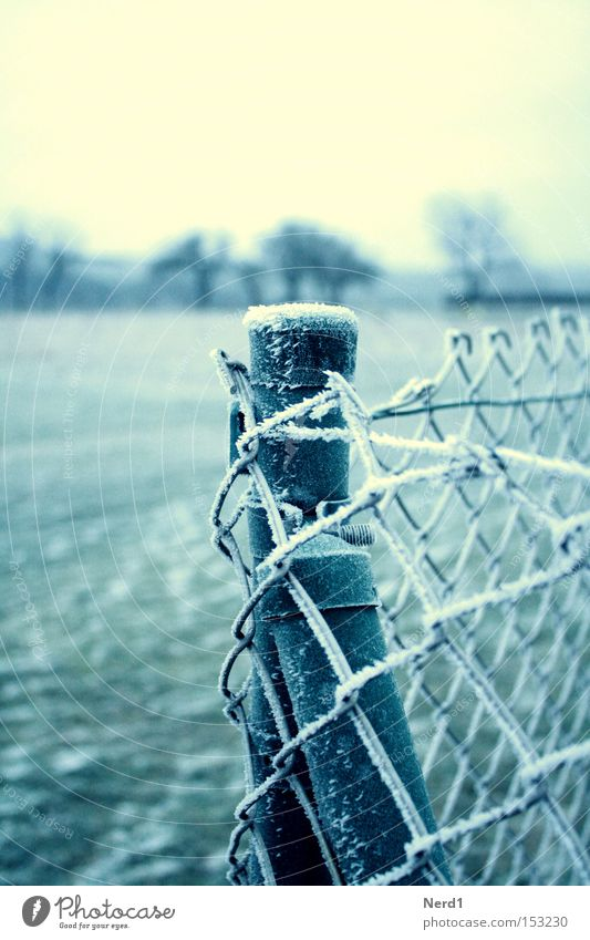 It's cold. Fence Wire netting Ice Winter White Green Hoar frost Wire netting fence Detail Section of image Subdued colour Fence post Cold