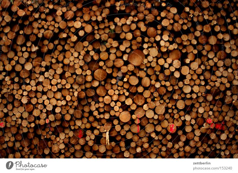 wood Wood Stack Storage Saw mill Forestry Harvest Annual ring Tree trunk Structures and shapes Arrangement cubic metre furniture factory Forester
