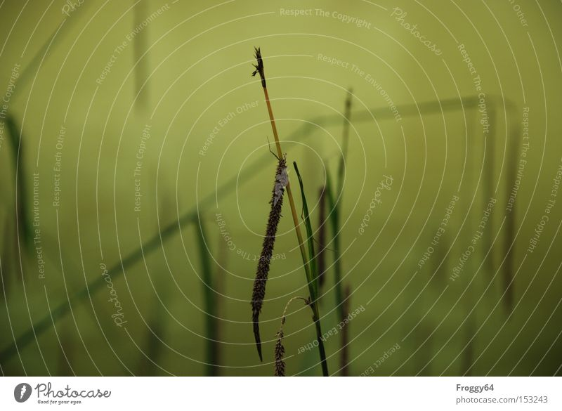 Relaxation Clouds Meadow Grass Walking Break River Navigation Berries Seed Brook Ear of corn Habitat Mountain meadow Grain