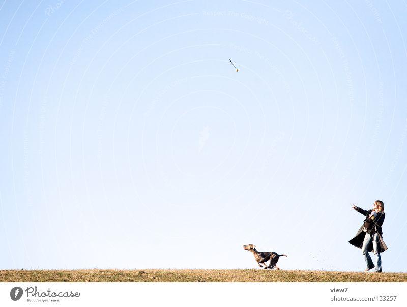 Sky Dog Summer Joy Grass Jump Leisure and hobbies Walking Flying Aviation Ground Ball Racing sports Snapshot Throw Mammal