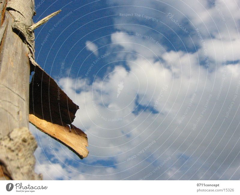 fence post Wood Fence Tree bark Clouds Tree trunk Sky Blue Shadow Nature