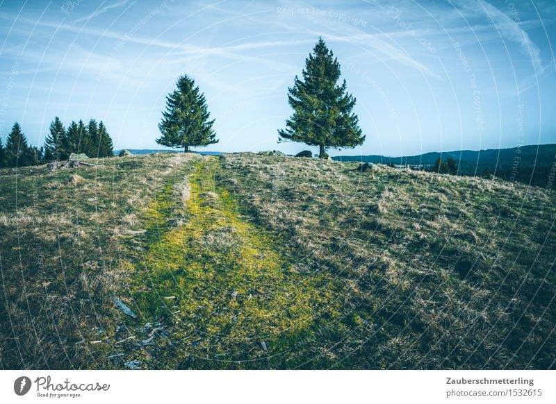 2 trees Nature Landscape Hill Mountain Lanes & trails Going Tall Together Curiosity Adventure Movement Horizon Climate Contact Black Forest mountain Clouds