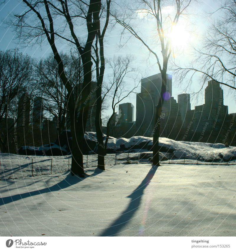 shadow blow Central Park Sun Shadow Winter Snow Calm Skyline Tree Blue Black Back-light Break New York City Clarity