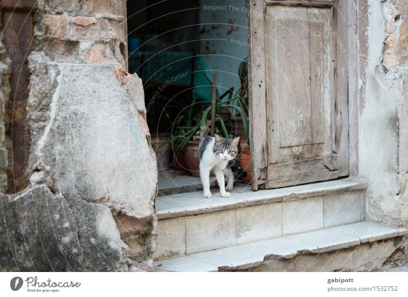 02_Cat on stairs in Havana Cuba House (Residential Structure) Wall (barrier) Wall (building) Stairs Facade Animal Pet Farm animal 1 Town Wild