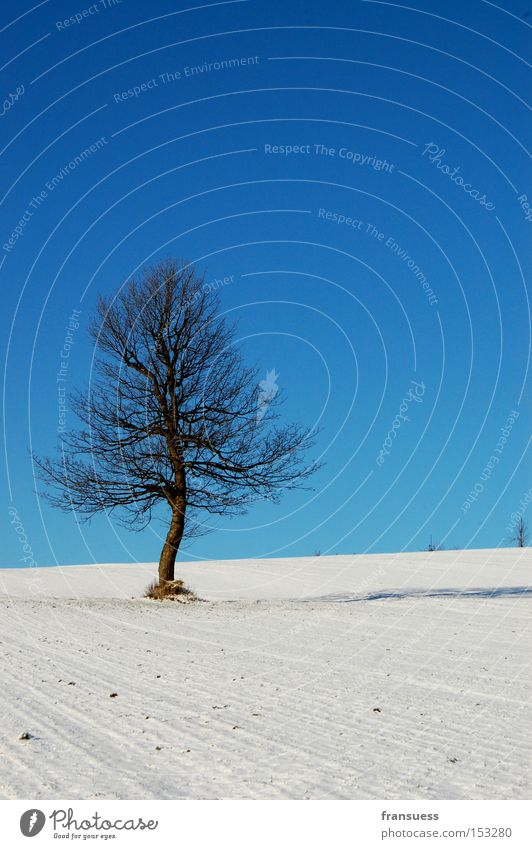 Nature Sky White Tree Blue Winter Vacation & Travel Loneliness Snow Relaxation To go for a walk Bavaria Poetic