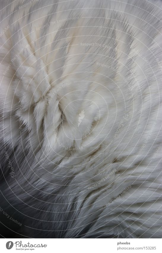 the fur the clouds are made of. Cat White Pelt Animal Clouds Bright Shadow Caress Hair and hairstyles